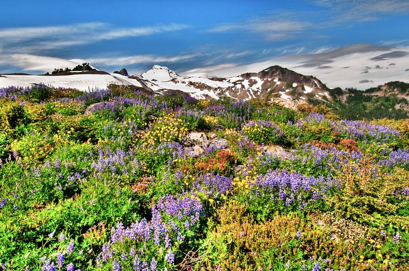 Wildflowers just off Ptarmigan Ridge trail