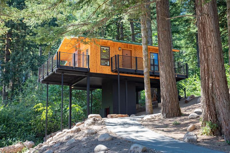 Treehouses_2020-1009