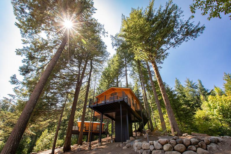 Treehouses_2020-1007