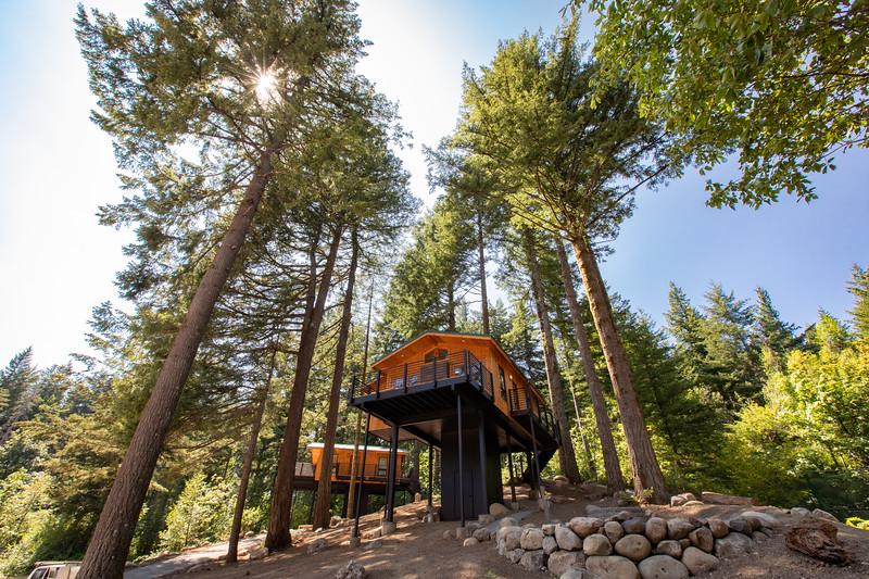 Treehouses_2020-1008