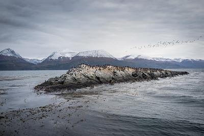 DSCF0271 ushaia isla cormoranes.jpg