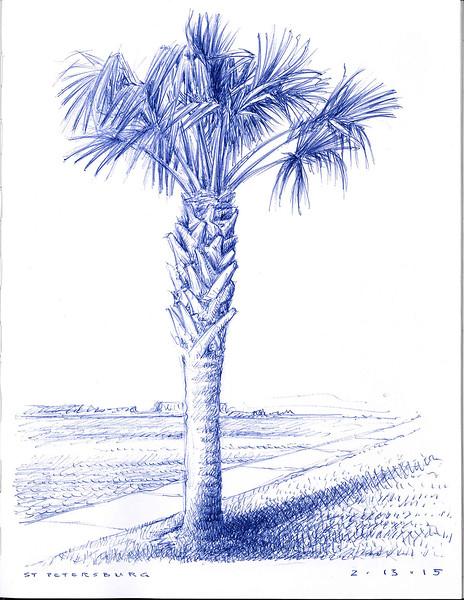 st petersburg palm tree 2/3/2015