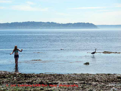 Alki beach, the less crowded part that's rocky but good beach combing at low tide .  Note heron on the right.