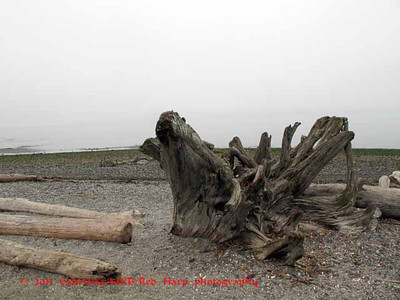 driftwood and beach