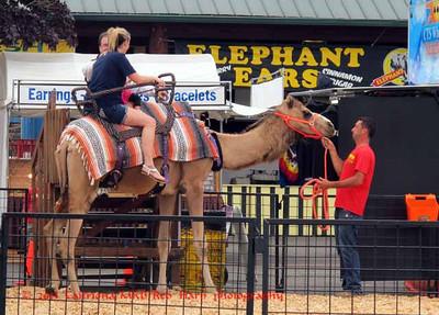 Camel Rides ? !
