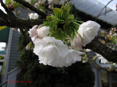 blossoms on tree