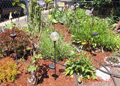Garden #44 Jeni & Greg