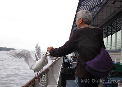 Tina feeding gulls