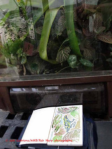 Mark S's sketch of the frog in a terrarium