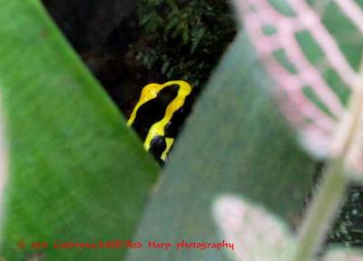 frog in a terrarium