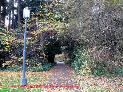 Path through Medicinal Herb Garden
