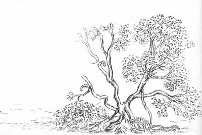 Tree vines