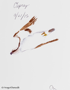 Diving Osprey in watercolors by Anaya
