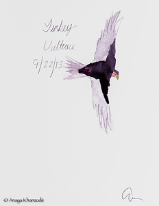 Turkey Vulture in watercolors by Anaya