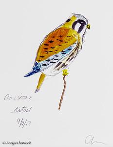 American Kestrel in watercolors by Anaya