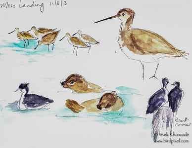 Shorebirds at Moss Landing - Watercolors