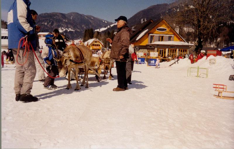 Reindeer at    Kranjska Gora, Slovenia