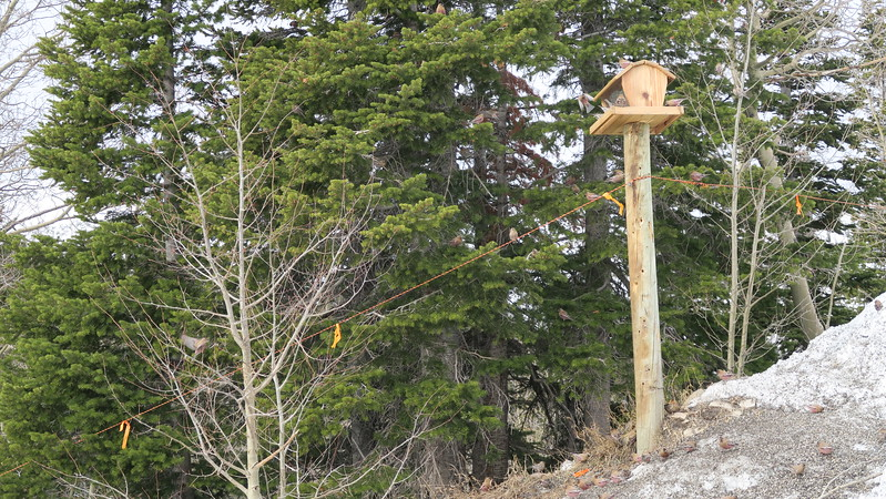 Bird Feeder at Sam's Knob, Snowmass