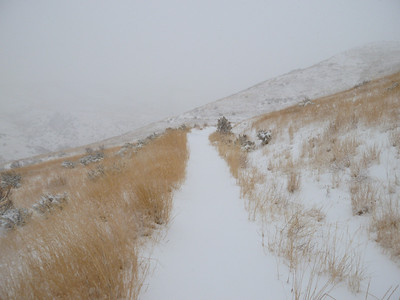 Foothills_January 18 2012