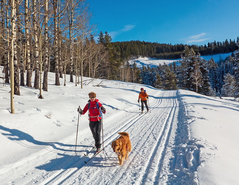 Jo, Piper, and Nancy enjoying the perfect weather and ski conditions on the Iron Springs trail, at West Bragg Creek.