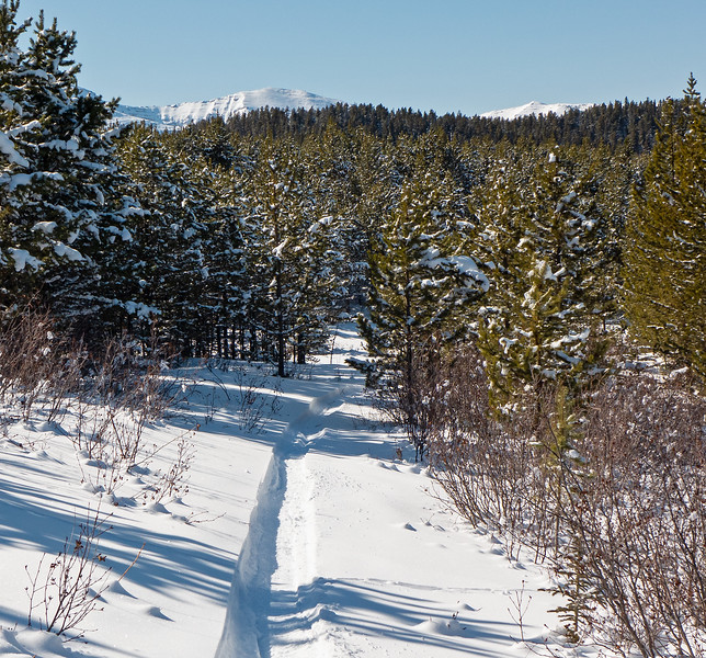 Fat bike grooming or Nordic single track? Both! Long Distance North trail, March 16.