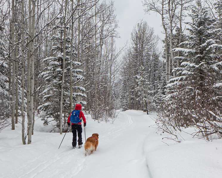 Winter wonderland, Iron Creek trail at West Bragg Creek, March 24.