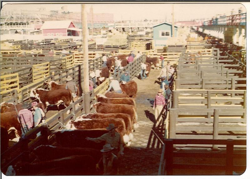 Stock show, January 1976