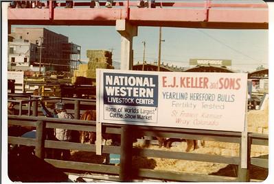 Keller bulls