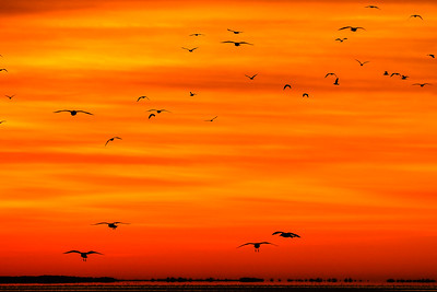"""""""Sky Pilots"""" (photography) by Heather Marsh"""