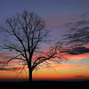 """Lone Oak at Lost Corner"" (photography) by Lynn Reinbolt"