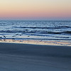 Birds Cruise the Surf at Dawn