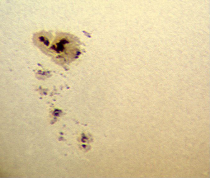 Sluneční skvrna AR1476 8.5.2012, Bresser Skylux 700/70, okulár 20mm, barlow 2x, Kodak Z1085IS afokálně