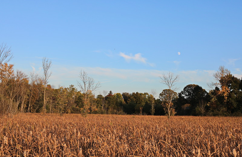 Moonrise over the Wetland