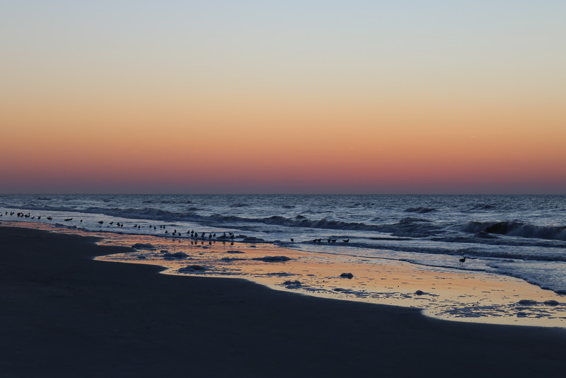Birds in the Surf and Sea Foam at Dawn