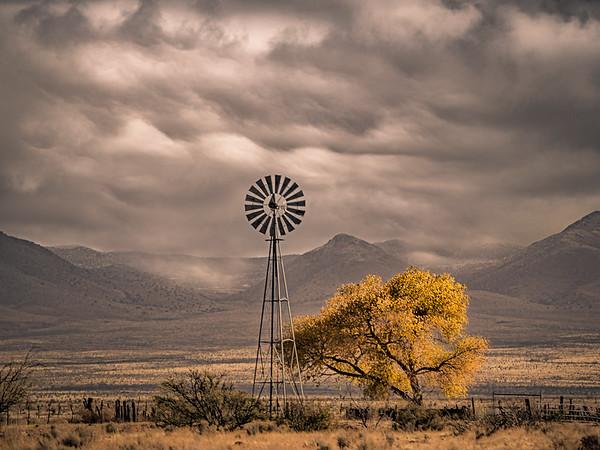 Windmill Ruffles
