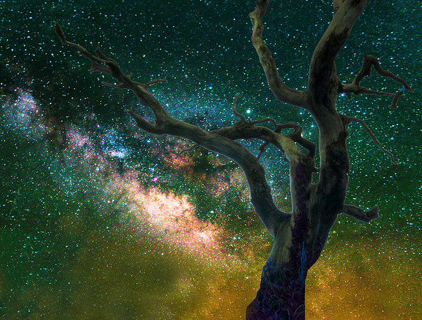 Branches of the Galaxy