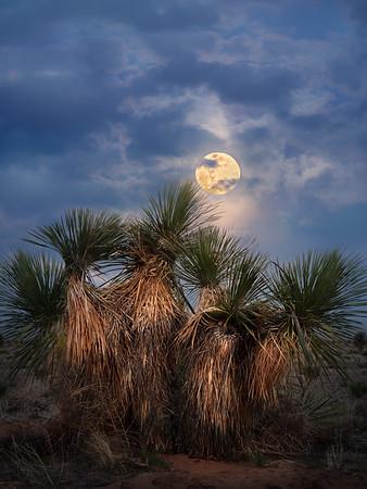 Twilight and Nightlight