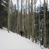 We get into the woods and need to get up this aspen glade.