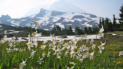 Lilies.. and our route up on the snow and rock to left of center.