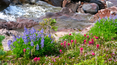 Lupine, Paintbrush and creeklet.