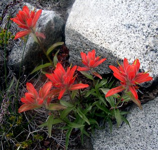 Vivid red paintbrush.