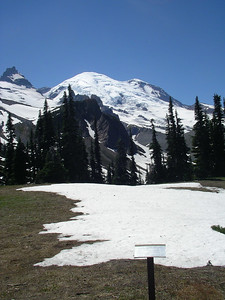 View of Summerland meadows, and Emmons glacier, Mt. Rainier.
