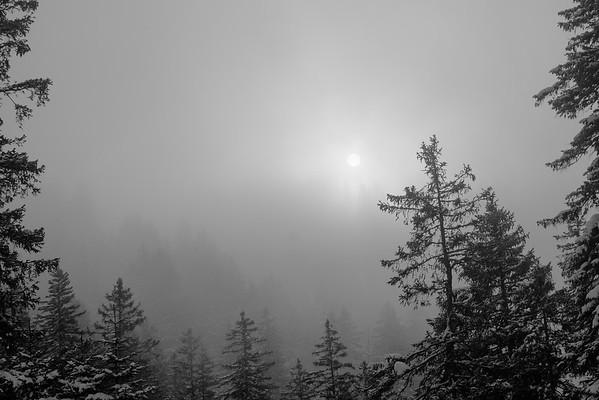 Sun, fog, trees...