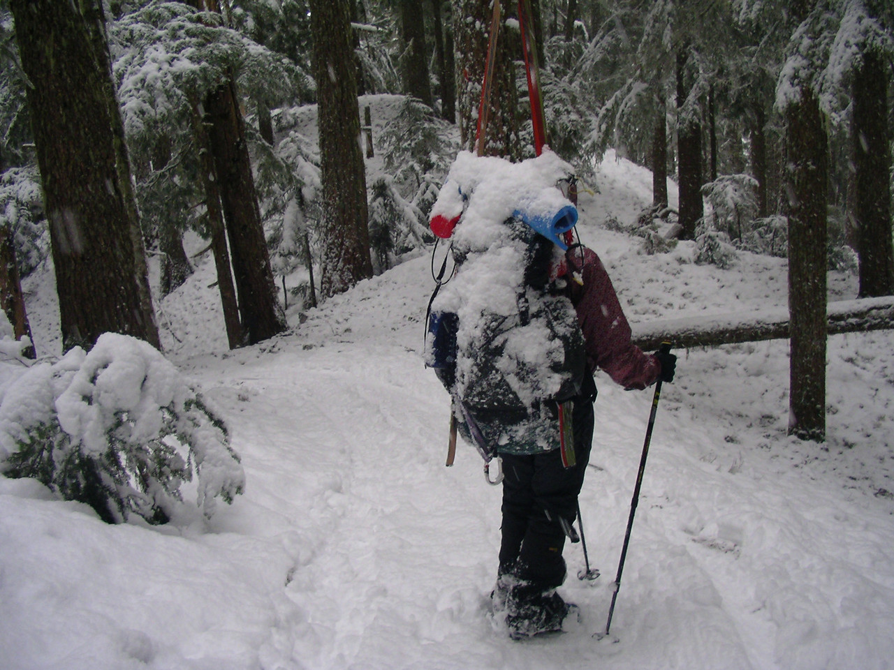 Our packs got heavy as the snow on the branches fell down on top of us. We skied through the trees on the trail for as long as I could. I gave up earlier than Scott Phil and Martina! Takes some skill to maneuever through the branches.