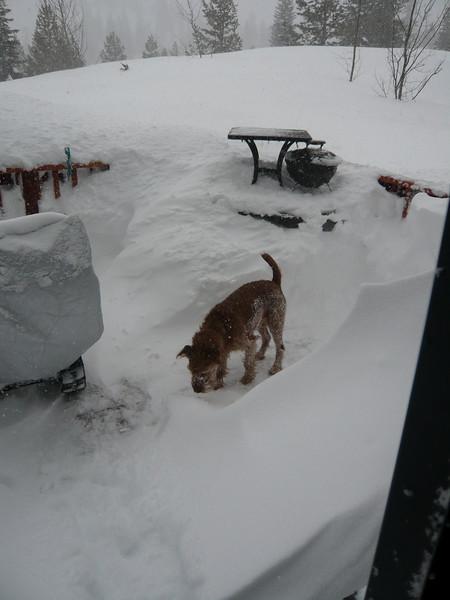 03/24/2011 - Riley On Back Deck