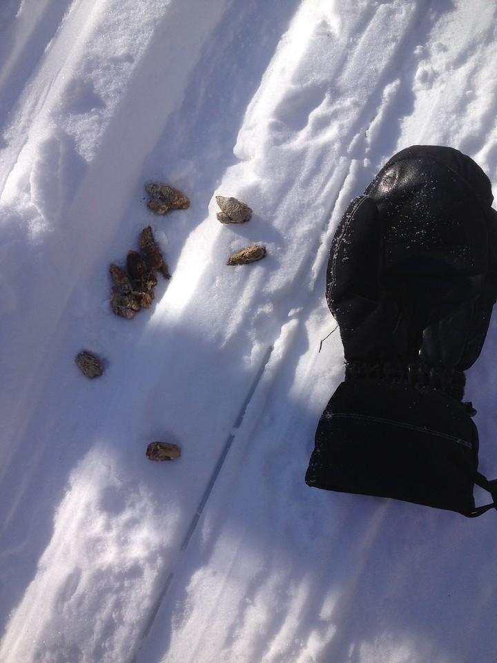 Scat on the Chickadee.