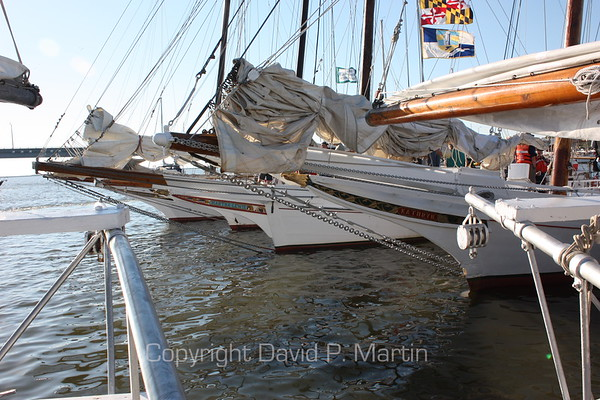 The skipjacks at dock on the morning of the race. (2010)