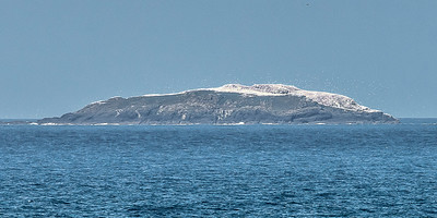 Grassholm - the colony holds 10 % of the Gannet world population.