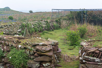 The old garden fence and one of the five Heligoland bird traps at Skokholm Farmhouse.