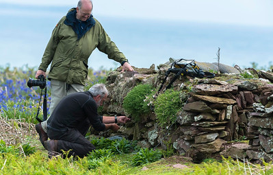 Wildlife Sound Recording. Simon Elliott miking up a Storm Petrels nest in the old garden wall at the farm, Skokholm, Wales.